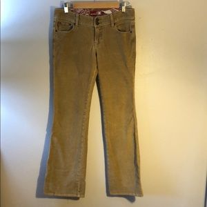 Hollister flared cords